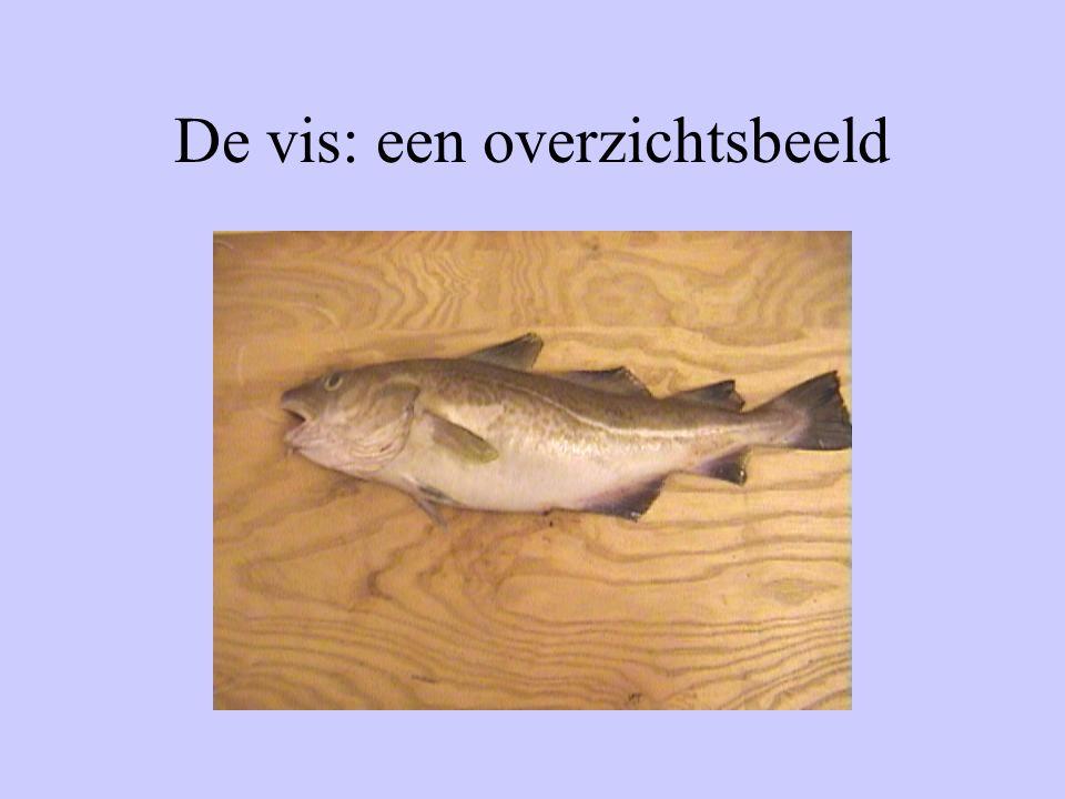 De vis: een overzichtsbeeld