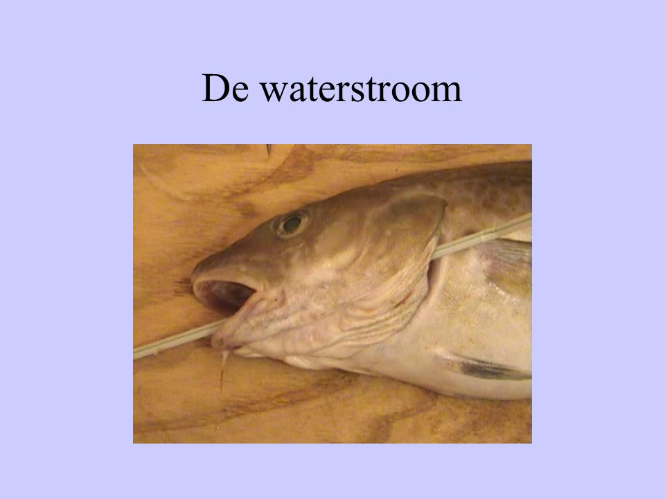 De waterstroom