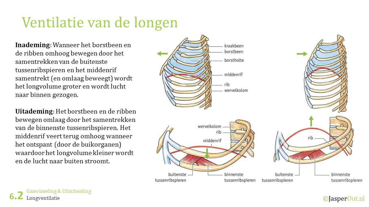 Ventilatie van de longen