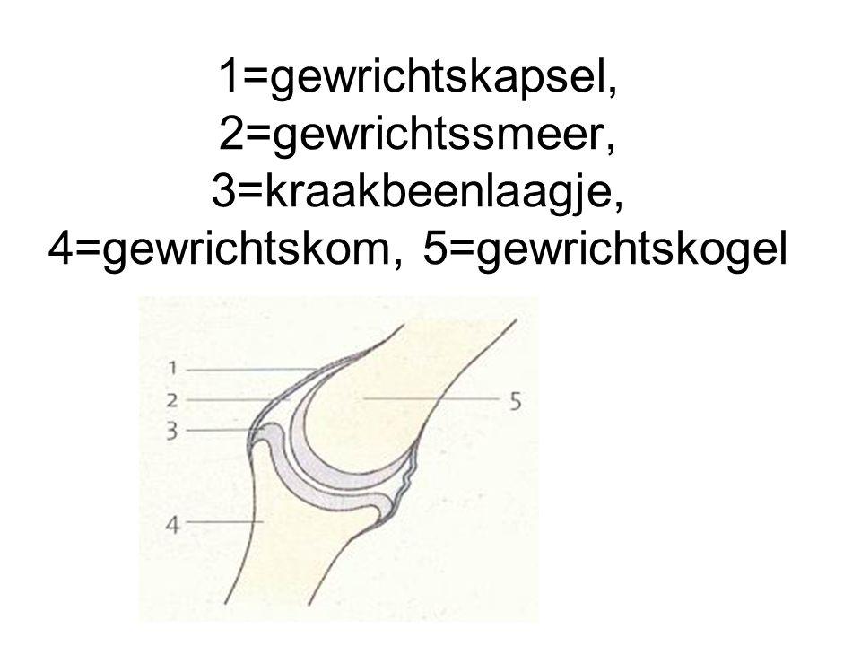 1=gewrichtskapsel, 2=gewrichtssmeer, 3=kraakbeenlaagje, 4=gewrichtskom, 5=gewrichtskogel