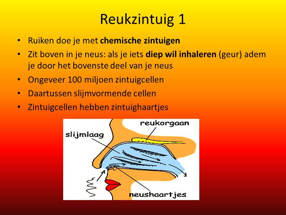 Reukzintuig 1 Ruiken doe je met chemische zintuigen