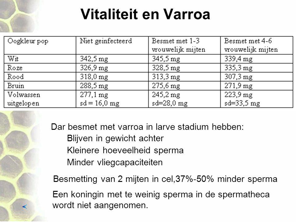 Vitaliteit en Varroa Dar besmet met varroa in larve stadium hebben: