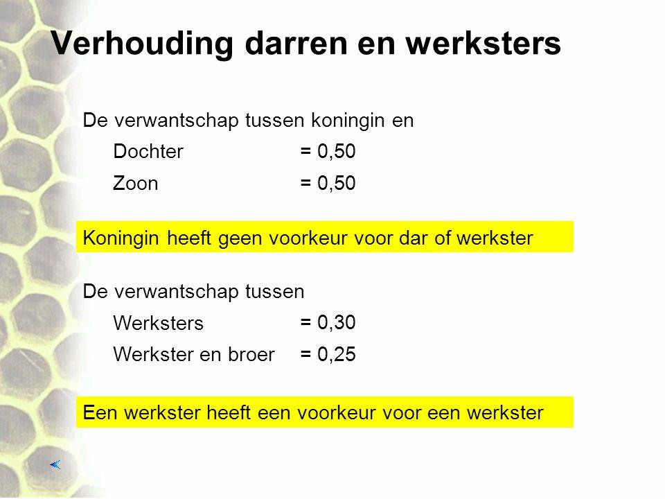 Verhouding darren en werksters