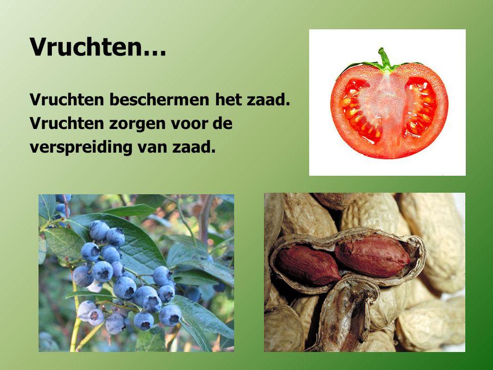 Vruchten… Vruchten beschermen het zaad. Vruchten zorgen voor de