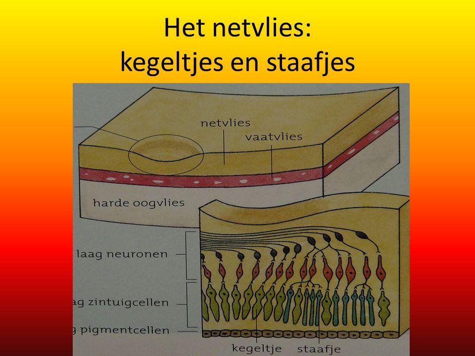 Het netvlies: kegeltjes en staafjes
