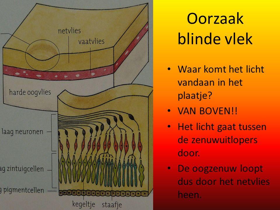 Oorzaak blinde vlek Waar komt het licht vandaan in het plaatje
