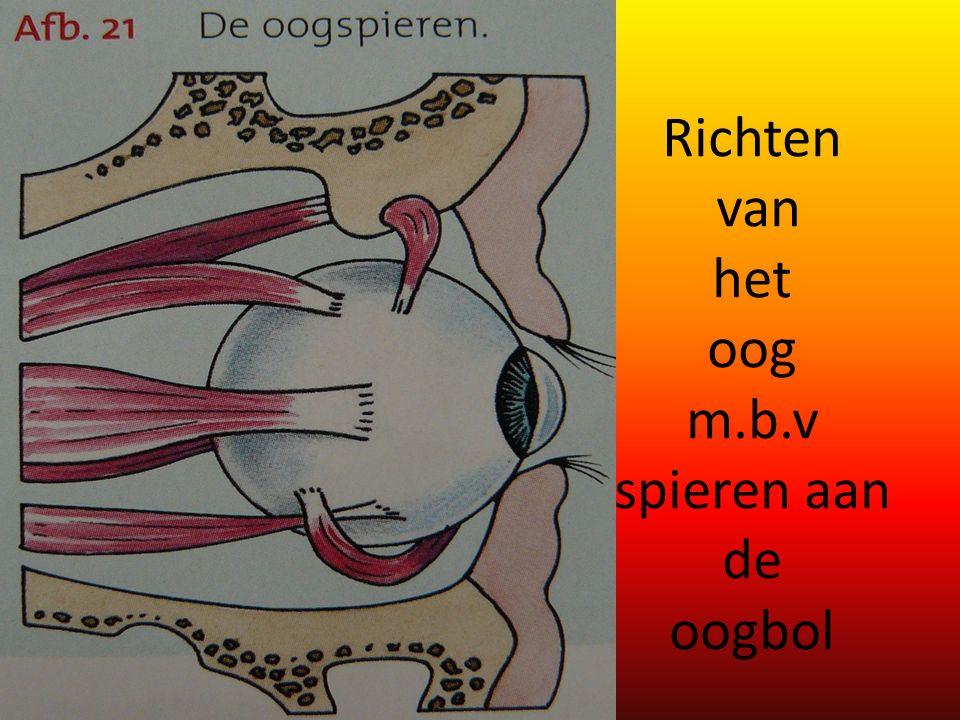 Richten van het oog m.b.v spieren aan de oogbol