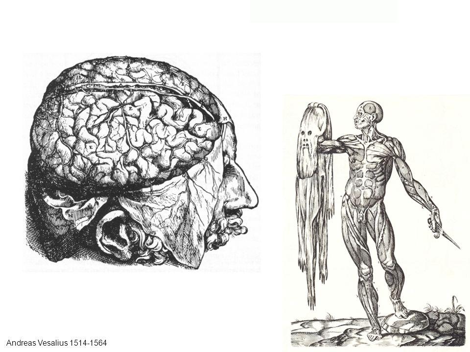 Andreas Vesalius 1514-1564