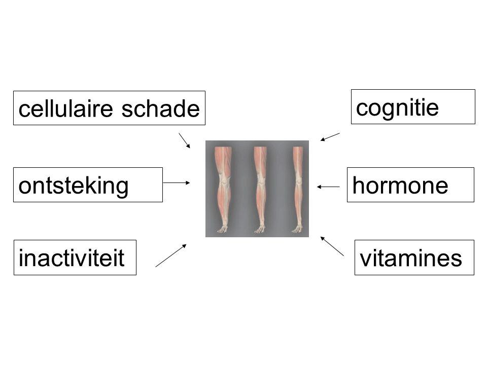 cellulaire schade cognitie ontsteking hormone inactiviteit vitamines