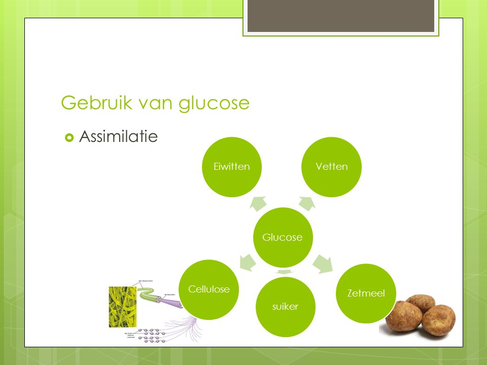 Gebruik van glucose Assimilatie Glucose Eiwitten Vetten Zetmeel suiker