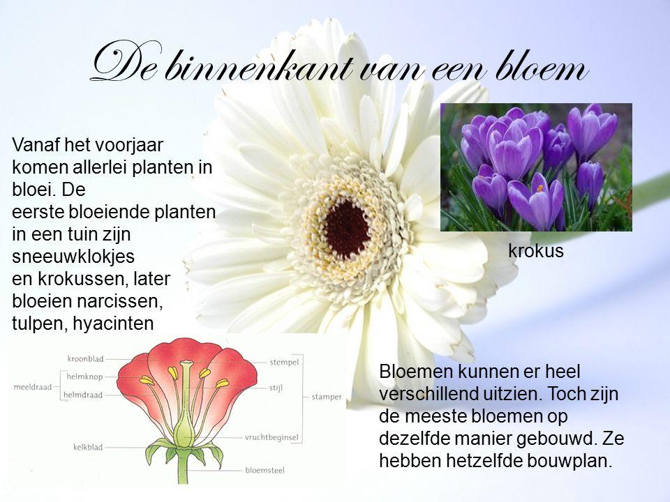 De binnenkant van een bloem