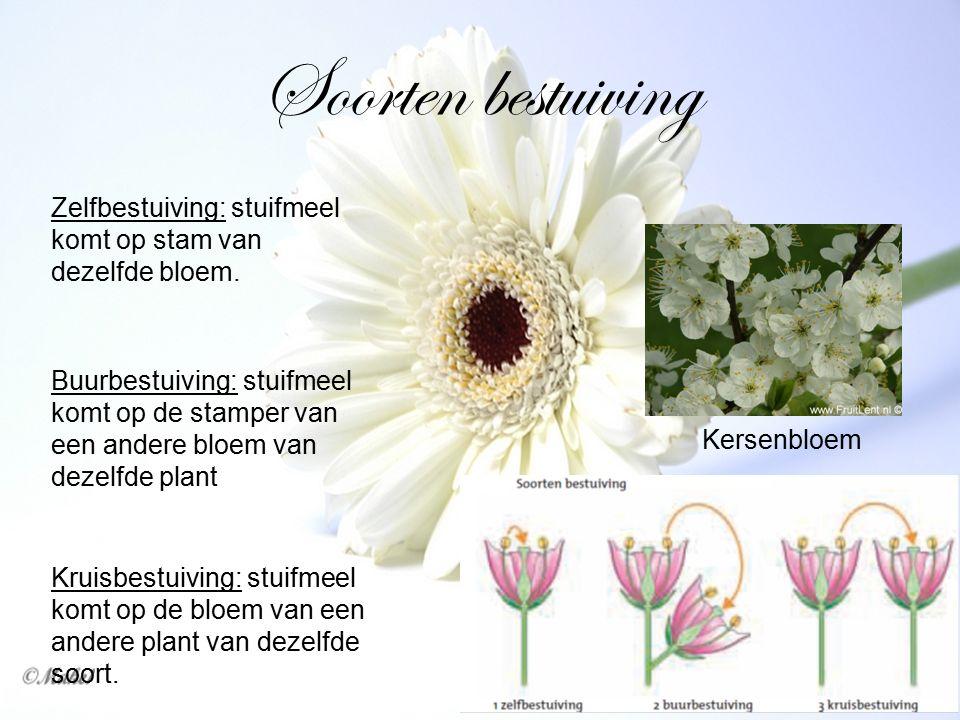 Soorten bestuiving Zelfbestuiving: stuifmeel komt op stam van dezelfde bloem.