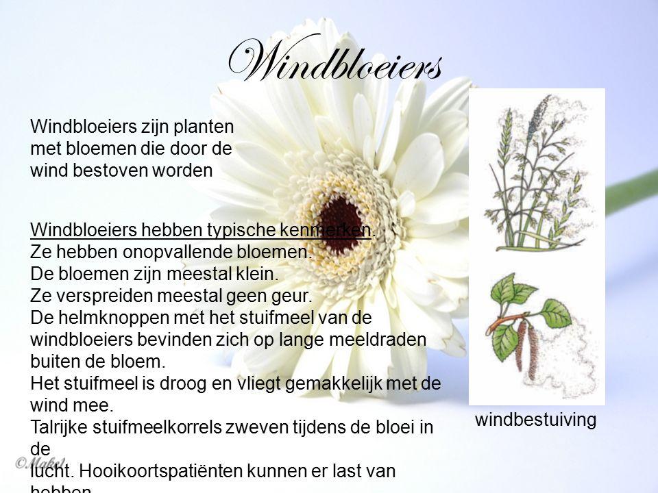 Windbloeiers Windbloeiers zijn planten met bloemen die door de