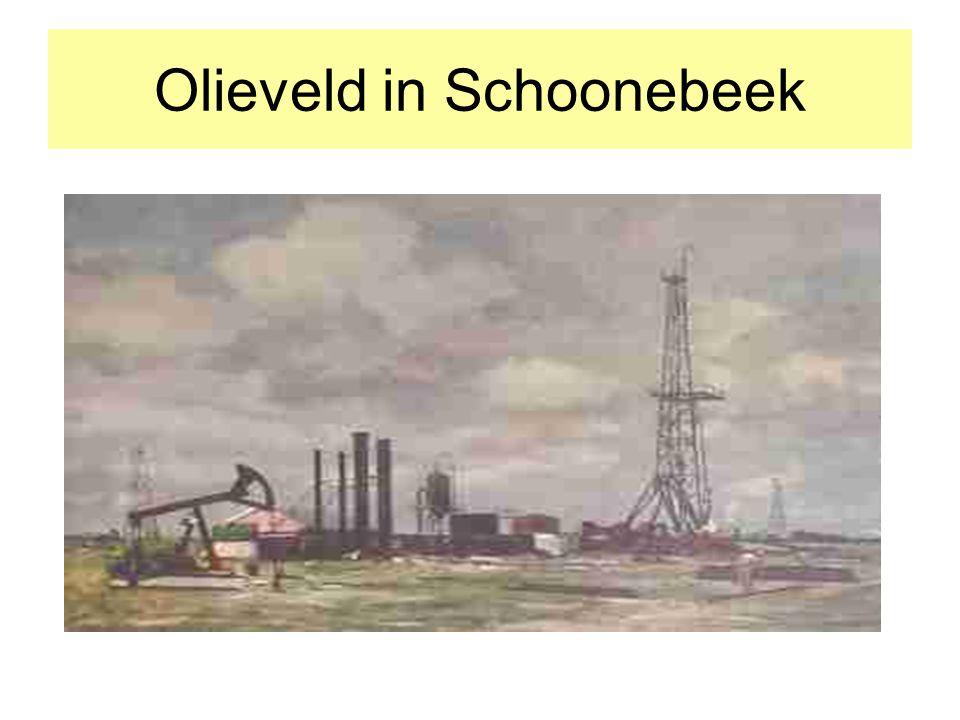 Olieveld in Schoonebeek