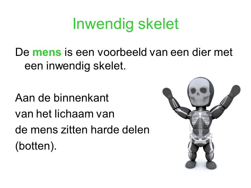Inwendig skelet De mens is een voorbeeld van een dier met een inwendig skelet. Aan de binnenkant. van het lichaam van.