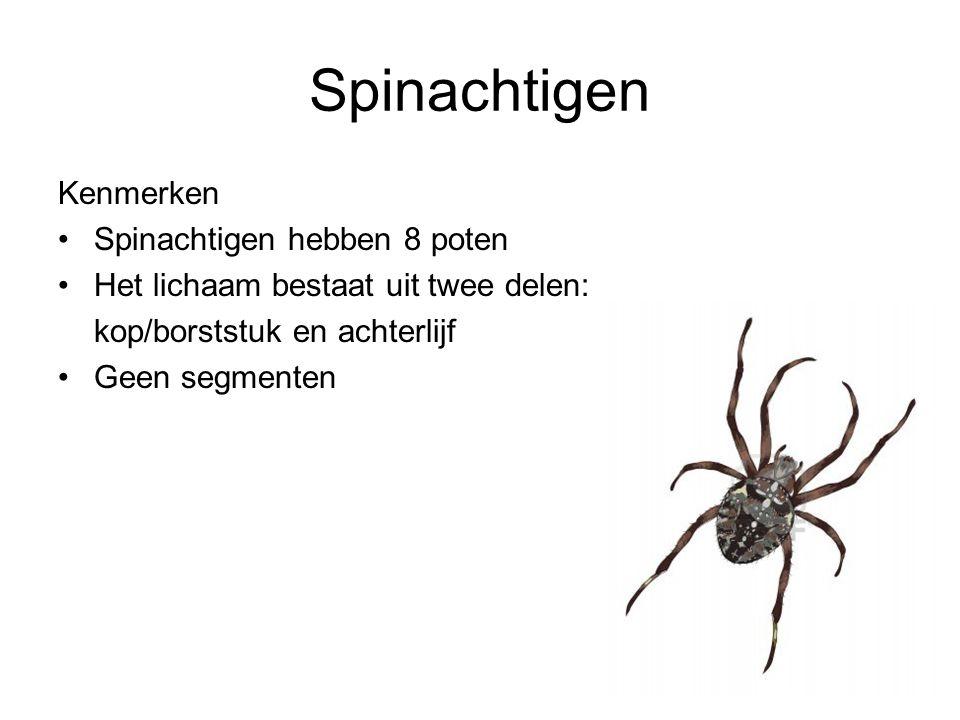 Spinachtigen Kenmerken Spinachtigen hebben 8 poten
