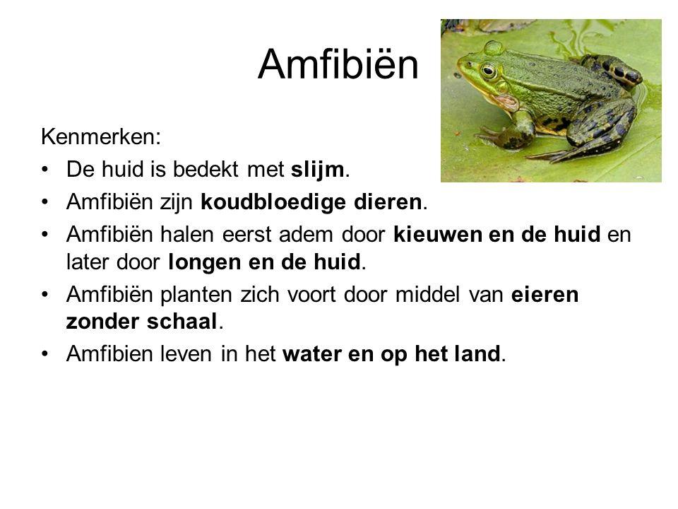 Amfibiën Kenmerken: De huid is bedekt met slijm.