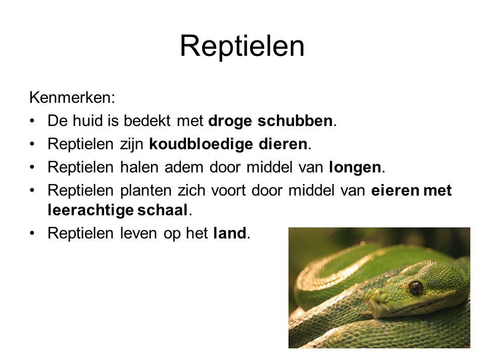 Reptielen Kenmerken: De huid is bedekt met droge schubben.
