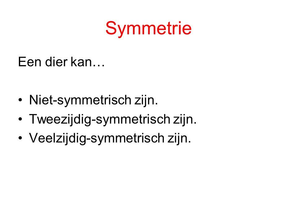 Symmetrie Een dier kan… Niet-symmetrisch zijn.