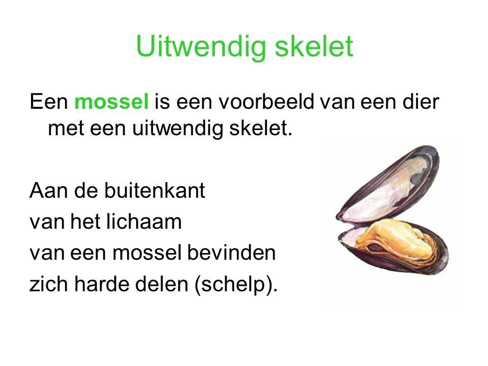 Uitwendig skelet Een mossel is een voorbeeld van een dier met een uitwendig skelet. Aan de buitenkant.