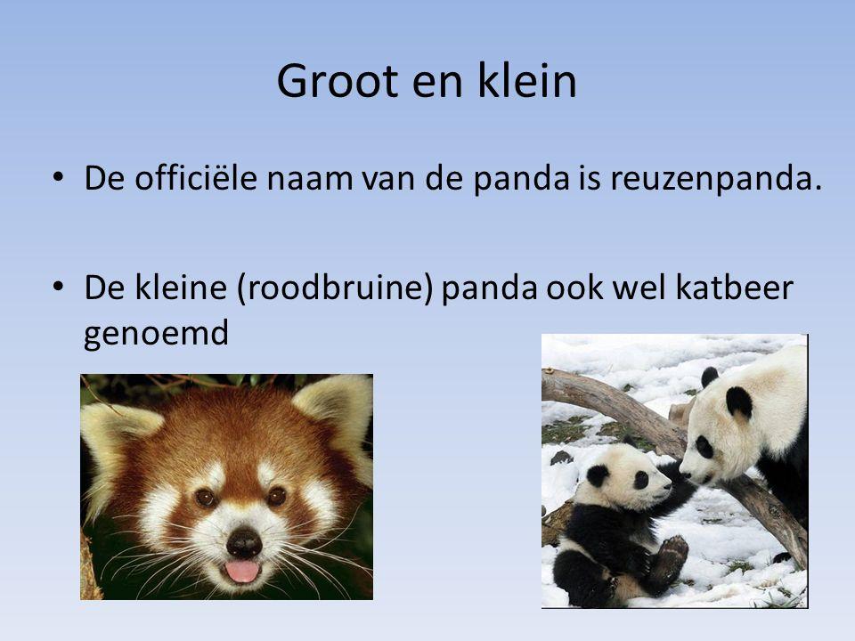 Groot en klein De officiële naam van de panda is reuzenpanda.