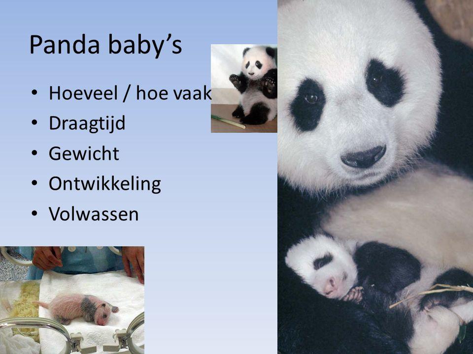 Panda baby's Hoeveel / hoe vaak Draagtijd Gewicht Ontwikkeling
