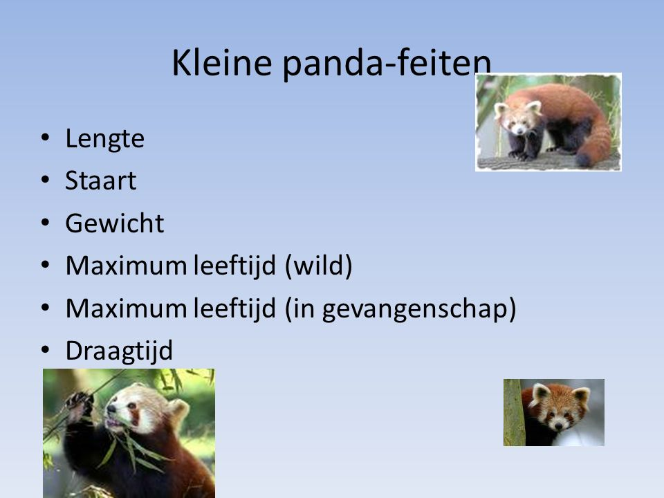 Kleine panda-feiten Lengte Staart Gewicht Maximum leeftijd (wild)