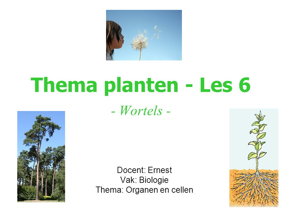 Thema planten - Les 6 - Wortels -