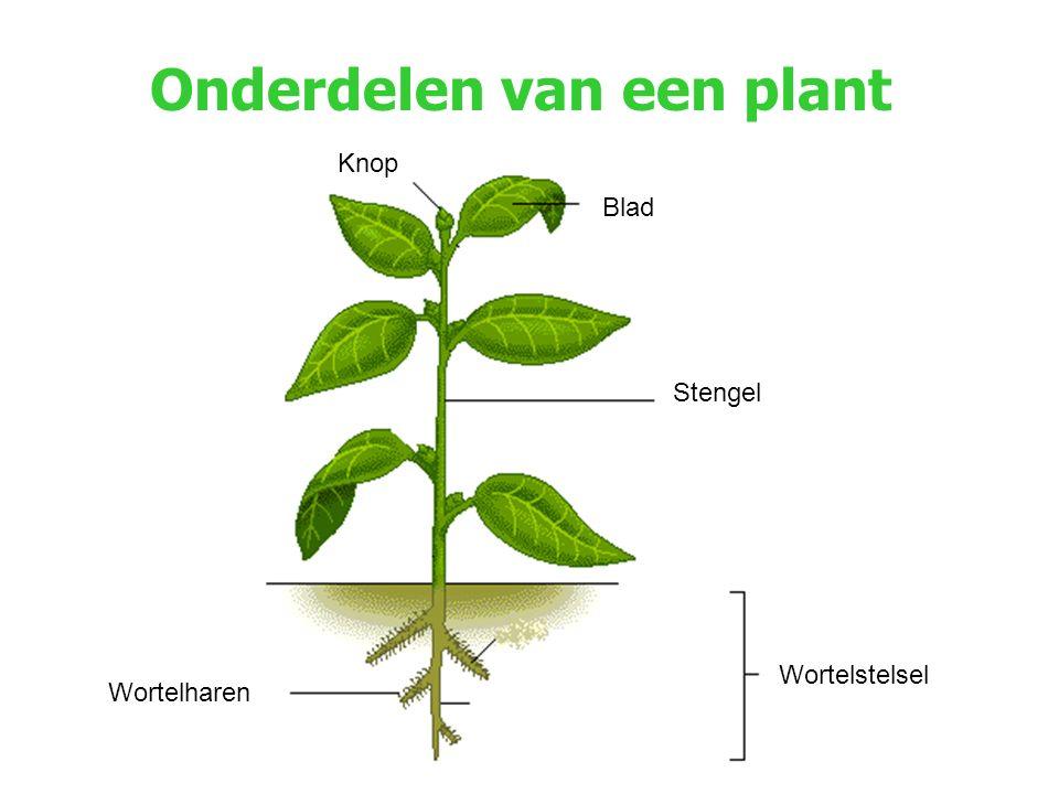 Onderdelen van een plant