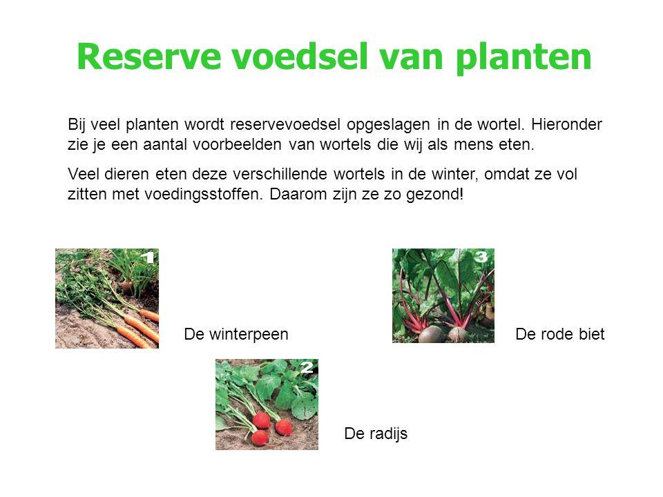 Reserve voedsel van planten