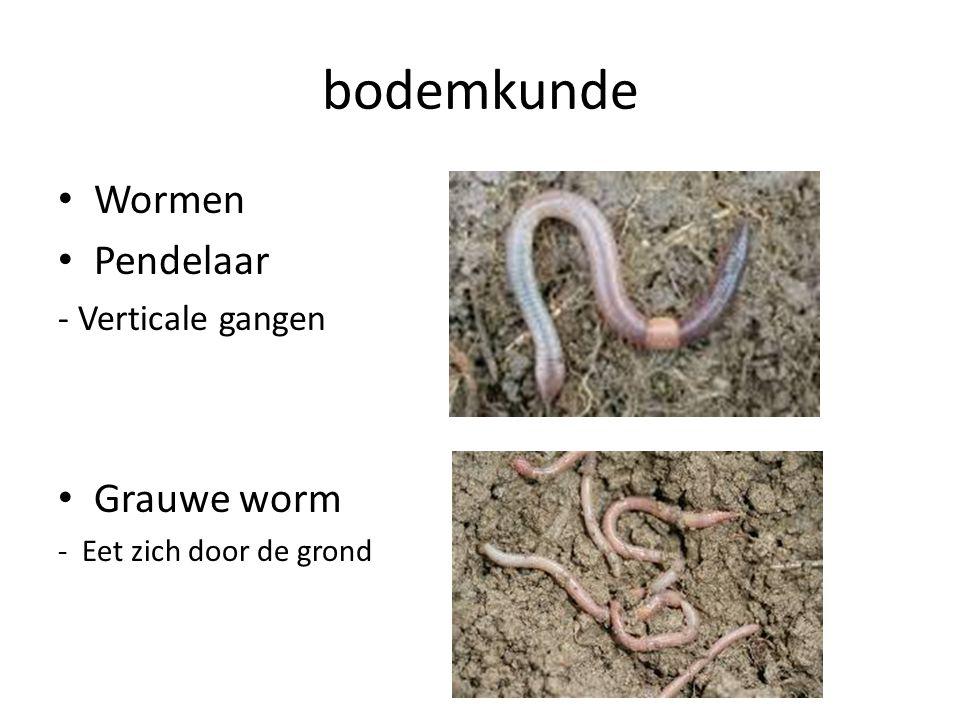 bodemkunde Wormen Pendelaar Grauwe worm - Verticale gangen