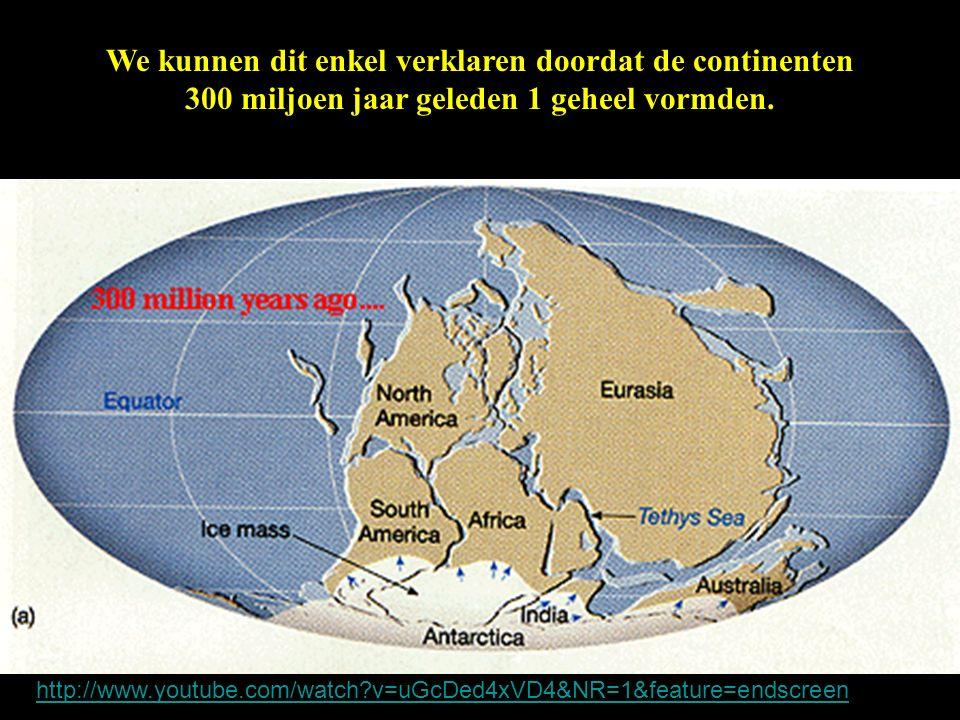 We kunnen dit enkel verklaren doordat de continenten 300 miljoen jaar geleden 1 geheel vormden.