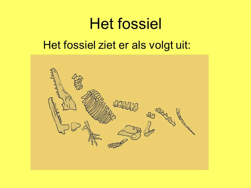 Het fossiel Het fossiel ziet er als volgt uit: