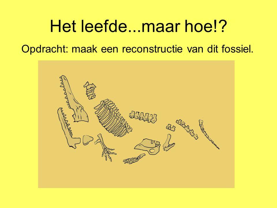 Het leefde...maar hoe! Opdracht: maak een reconstructie van dit fossiel.