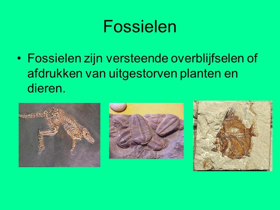 Fossielen Fossielen zijn versteende overblijfselen of afdrukken van uitgestorven planten en dieren.