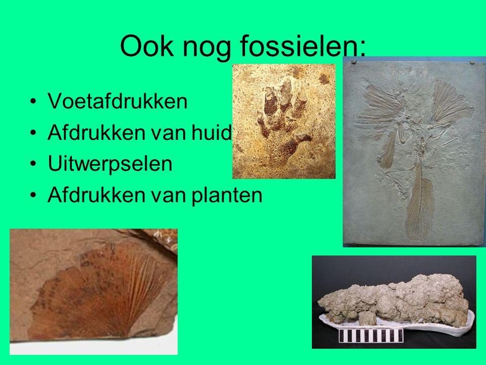Ook nog fossielen: Voetafdrukken Afdrukken van huid Uitwerpselen
