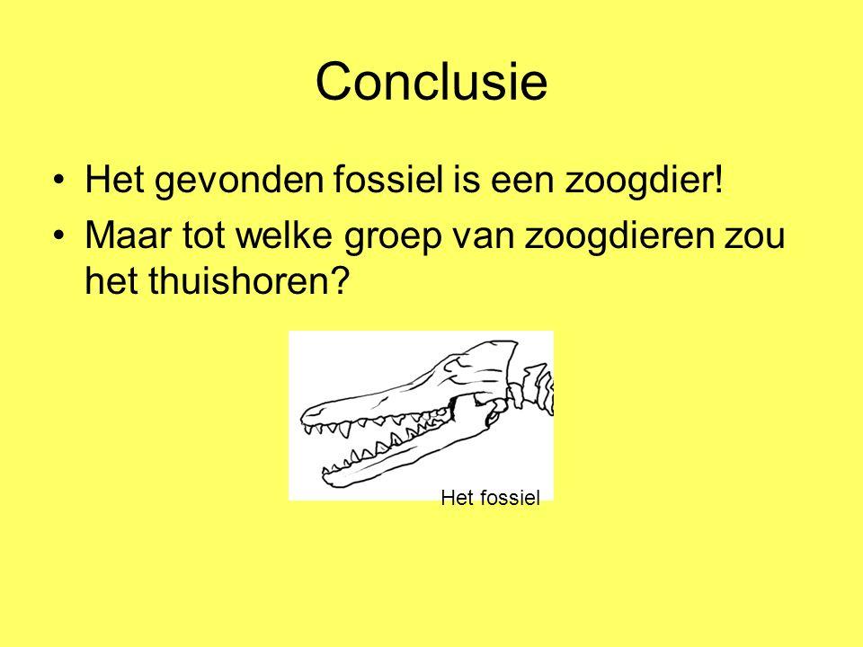 Conclusie Het gevonden fossiel is een zoogdier!