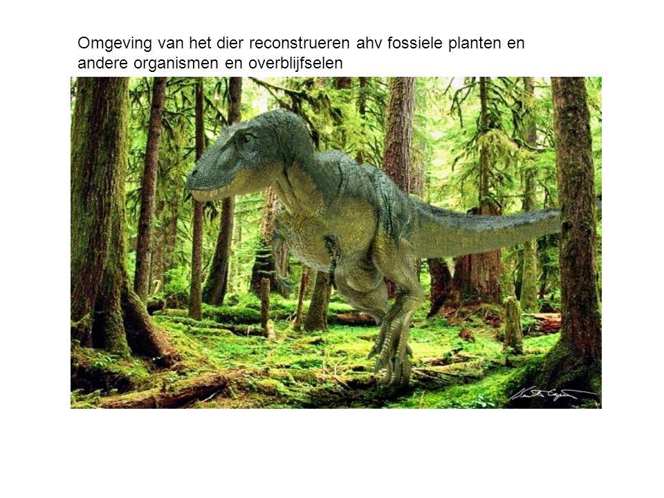 Omgeving van het dier reconstrueren ahv fossiele planten en andere organismen en overblijfselen