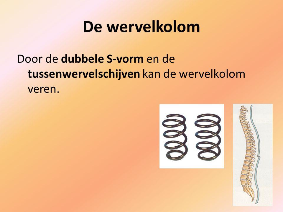De wervelkolom Door de dubbele S-vorm en de tussenwervelschijven kan de wervelkolom veren.