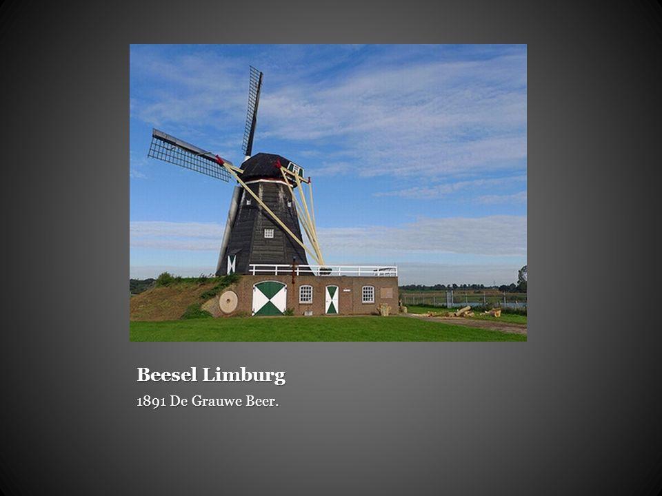 Beesel Limburg 1891 De Grauwe Beer.