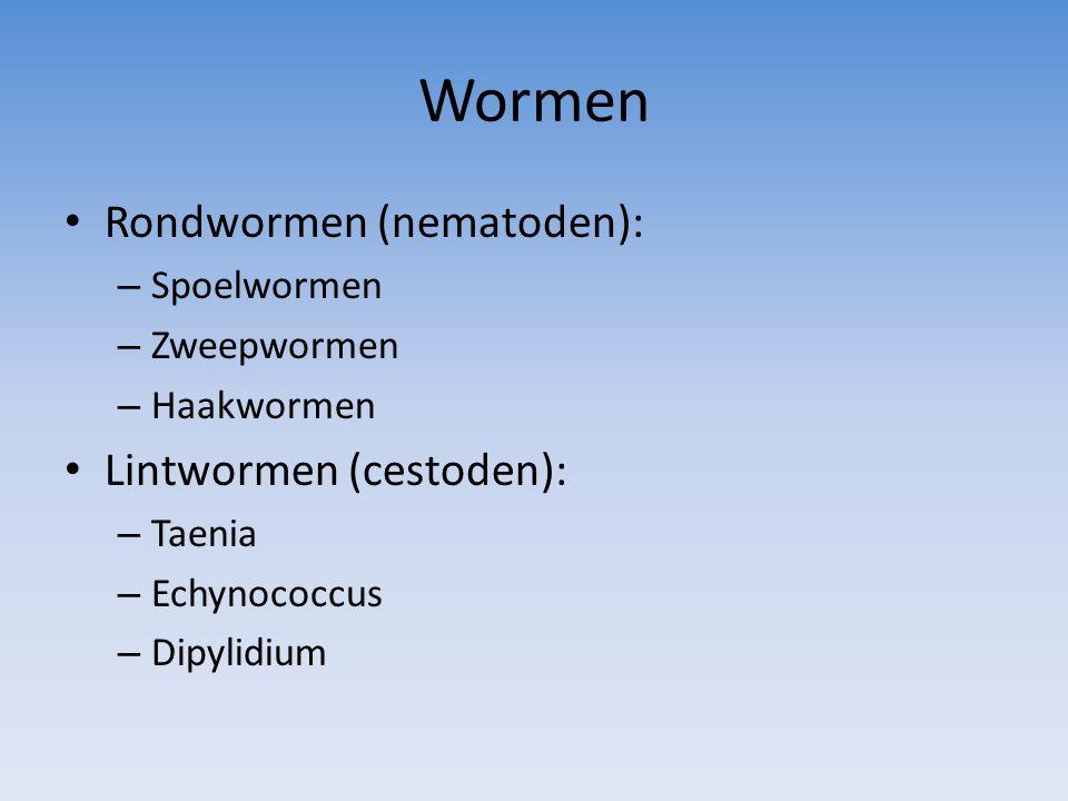 Wormen Rondwormen (nematoden): Lintwormen (cestoden): Spoelwormen