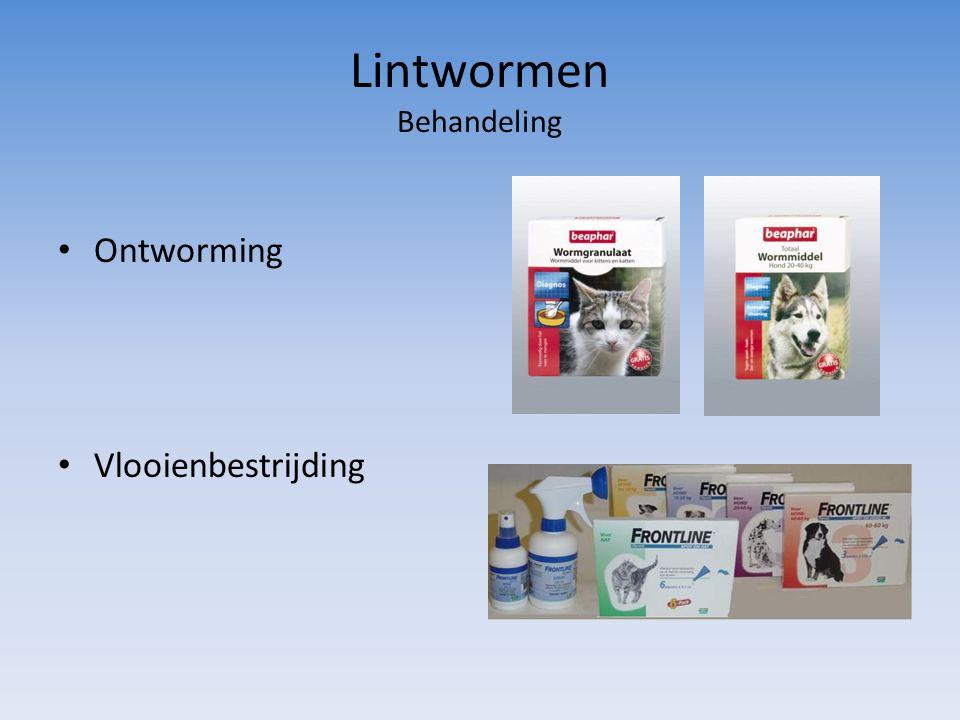 Lintwormen Behandeling