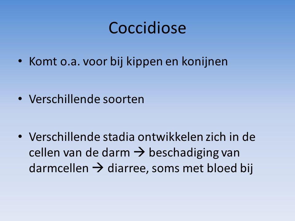 Coccidiose Komt o.a. voor bij kippen en konijnen Verschillende soorten