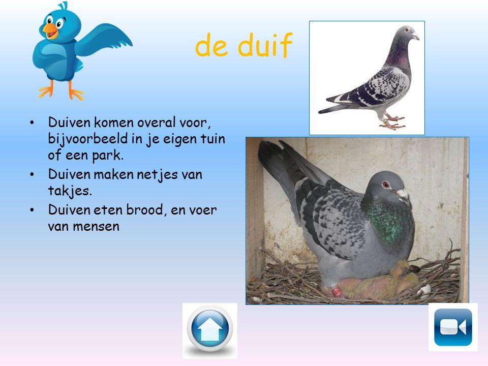 de duif Duiven komen overal voor, bijvoorbeeld in je eigen tuin of een park. Duiven maken netjes van takjes.