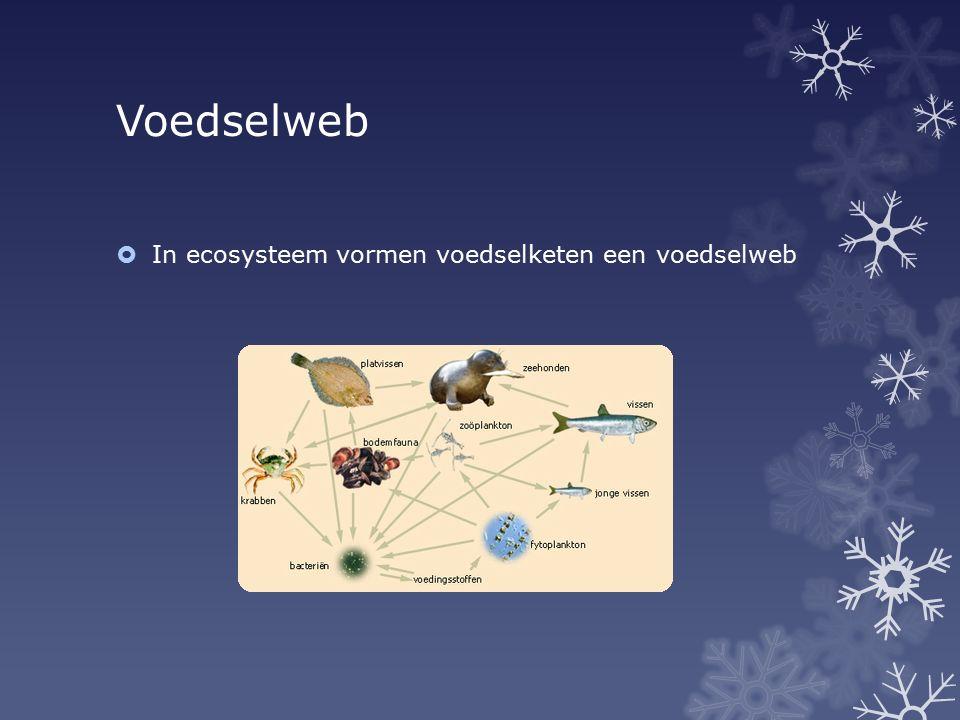 Voedselweb In ecosysteem vormen voedselketen een voedselweb