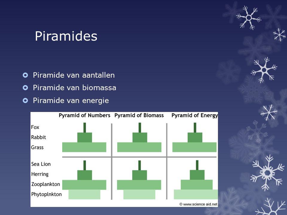 Piramides Piramide van aantallen Piramide van biomassa