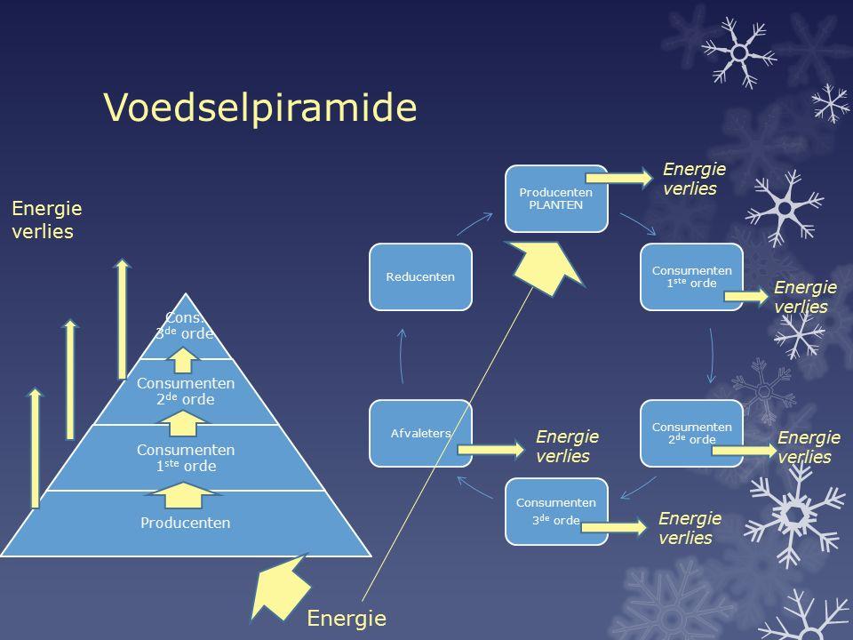 Voedselpiramide Energie Energie verlies Energie verlies