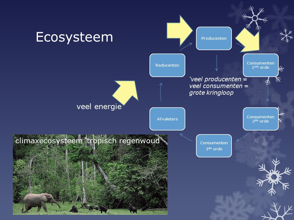 Ecosysteem veel energie climaxecosysteem 'tropisch regenwoud