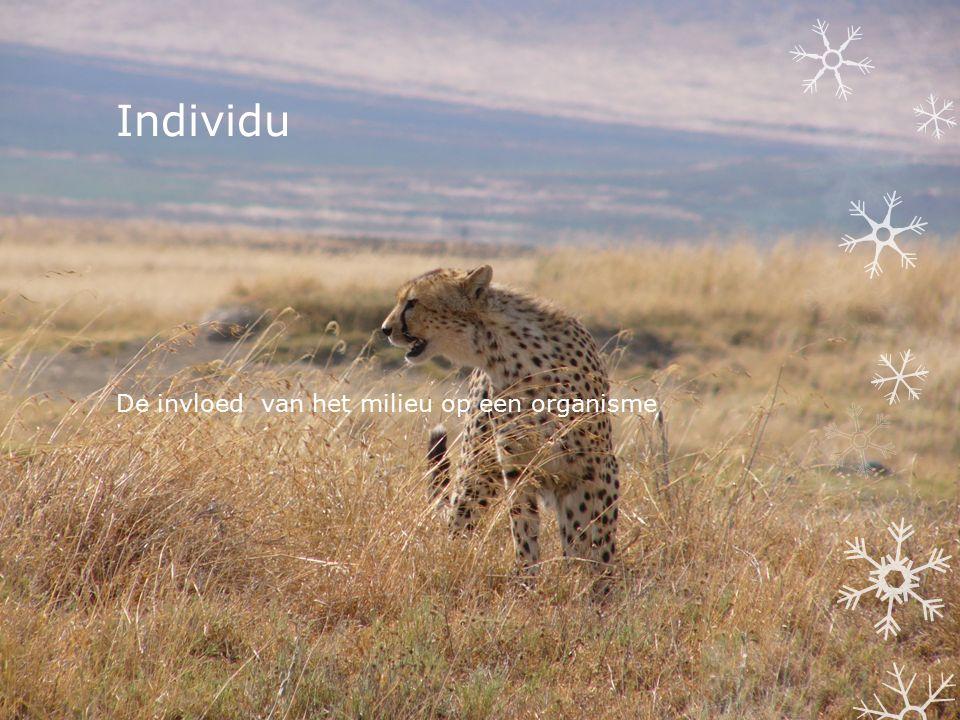 Individu De invloed van het milieu op een organisme