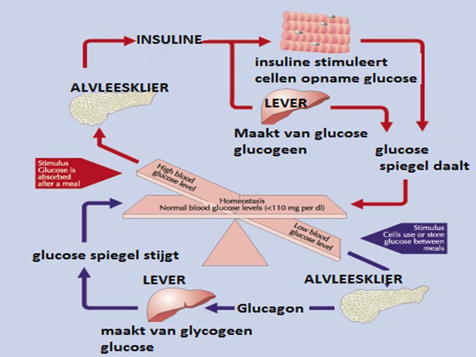 Glucose wordt afgegeven aan het bloed om glucosespiegel op peil te houden